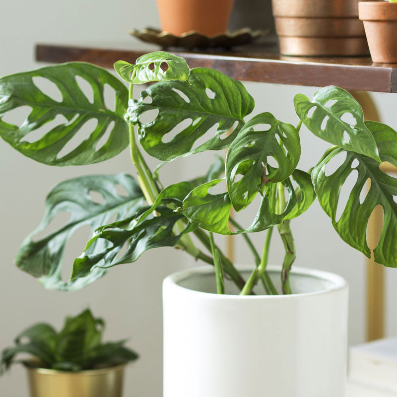 Plant stlying